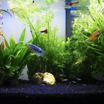 Installer son aquarium avec Botanic